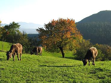 Assegnazione dei terreni montani per uso civico di pascolo. Bando anno 2019.