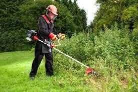 Ordinanza sfalcio la rimozione di erbe, erbacce infestanti, piante rampicanti e qualsiasi tipo